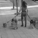 La chica que se gana la vida paseando a los perros de otros. JPMC